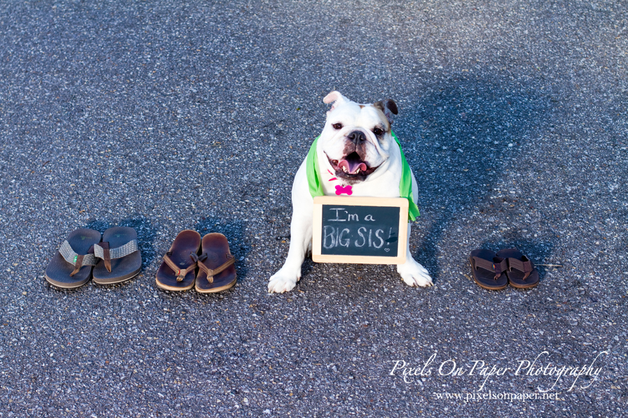 pixels on paper baby announcement with dog photo